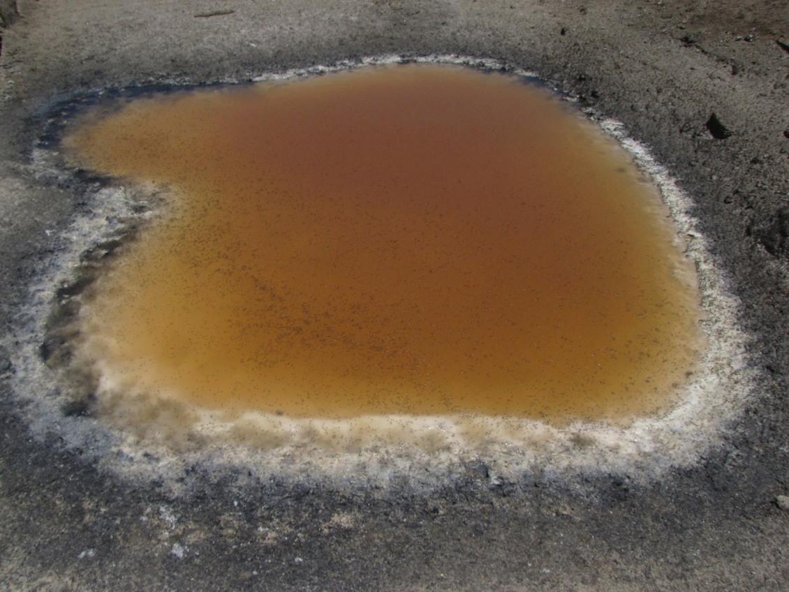 salt-pool