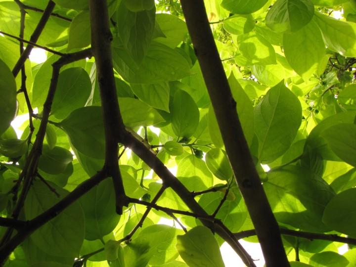 underneath-the-tree