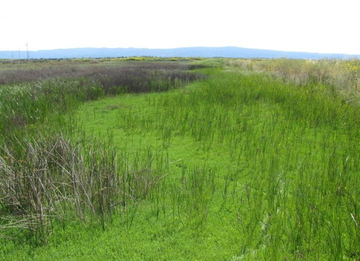 don edwards marsh